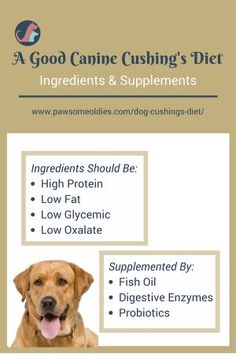 Canine Cushing's diet with supplements, together with natural remedies such as herbs may help dogs with Cushing's disease. A Cushing's diet should be low fat, low glycemic, and low oxalate. Read this page to find out more. Cushings Disease Dogs, Cushing Disease, Banana Drinks, Dog Diet, Low Fat Diets, Diet Supplements, Best Diets, Diet And Nutrition, How To Lose Weight Fast