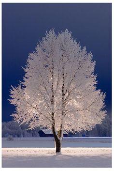 Winter Bliss of White on White....Beautiful...
