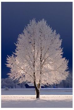 Winter Bliss of White on White....Beautiful...