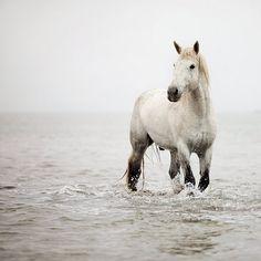 El galope de un caballo por la playa