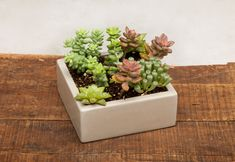 "From Auré Aura: Concrete Planter Centerpiece - 7"" Light Grey This centerpiece is thoughtfully designed and handmade throughout."