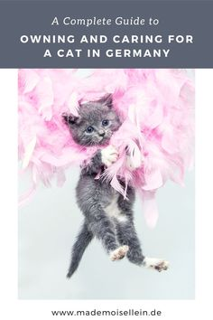 Moving To Germany, Cat Care Tips, Maine Coon Cats, Pet Life, Buy A Cat, Cat Health, Pet Supplies, Adoption, Kitten