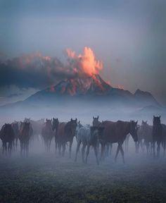 Eeyore's eye — geographicwild:   .  Wild Horses.  Photo by...