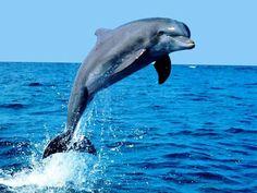 Hay más cosas en el cielo y en la Tierra ...: Animales más evolucionados..