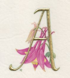 """A is for Aquilegia"" by Kathy Pickles"