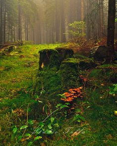 Forest in Norway by Studio Toffa Photography Beautiful World, Beautiful Places, Beautiful Norway, All Nature, Walk In The Woods, Belleza Natural, Wonders Of The World, Mousse, Woodland