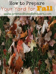 How to Prepare Your Yard for Fall- Use these helpful tips for preparing your yard this fall. You can enjoy a beautiful yard and have less to do come spring. Landscaping Tips, Front Yard Landscaping, Organic Gardening Tips, Perfect Plants, Fall Plants, Garden Projects, Garden Tips, Autumn Garden, Growing Vegetables