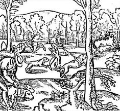"""""""In 1500, the last wolf was killed in England. In 1770, Ireland's last wolf was killed. In 1772, Denmark's last wolf was killed. (The picture is a medieval wolf hunt.)"""""""