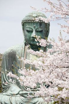 Even daibutsu can enjoy cherry blossoms!