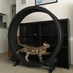 Working out in the morning helps keep metabolism moving all day long. One Fast Cat Exercise wheel is the best way for your cute cat to exercise. Cat Exercise Wheel, Wooden Cat, Cat Scratching Post, Unique Cats, Cool Cats, Diy Home Decor, Room Decor, Diy Gifts, Diy And Crafts