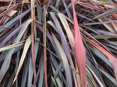 TertiaryColours by Tony Tooth
