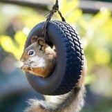 Squirrel tire swing so amazing