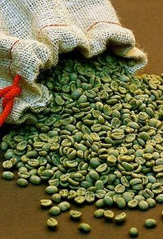 Is Latin American green coffee bean extract the key to weight loss?