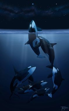 Orca Art This is how these beautiful creatures should be. Beautiful Creatures, Animals Beautiful, Cute Animals, Orcas, Orca Kunst, Le Morse, Orca Art, Whale Art, Wale