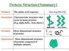 Protein Structure - Bing Images