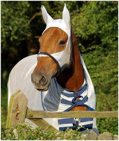 Horse-clothing-pictures-6.jpg