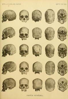 Ueber Hundert fünf und dreissig Papua-Schädel von Neu Guinea und der Insel Mysore (Geelvinksbai)