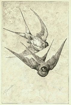 Swallows ♕ Hector Giacomelli, illustration to With the Birds, Boston, 1891 Images Vintage, Vintage Birds, Vintage Ephemera, Old Book Illustrations, Love Birds, Beautiful Birds, Vogel Illustration, Motifs Animal, Geniale Tattoos