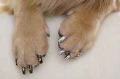 Curious if there are dog lovers out there who have their dogs nails done.