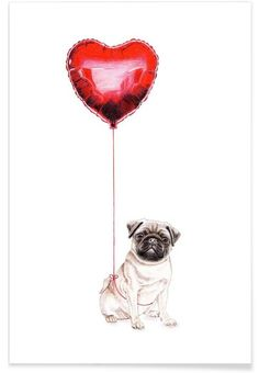 Pug & Balloon als Premium Poster von Janine Sommer Mops Tattoo, Happy Birthday Pug, Shih Tzu Hund, Pug Wallpaper, Animals And Pets, Cute Animals, Pug Tattoo, Pugs And Kisses, Pug Art