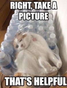 Ahhh... Funny Cat Pics With Captions #valuable