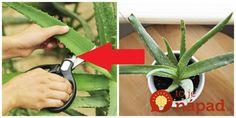5 Natural Kitchen Healers You Can't Live Without! Aloe Vera, Natural Kitchen, Organic Beauty, Garden Plants, Korn, Kefir, Veggies, Herbs, Health