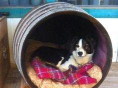 Wine barrel dog house for Ginny - layer bottom with cedar shavings to repel bugs Barrel Dog House, Cool Dog Houses, Cat Houses, This Is Us Movie, Niches, Cat Enclosure, Cat Tunnel, Outdoor Cats, Dog Items