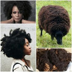Hair Like Wool Like Sheeps Wool Hair Like Wool Nappy