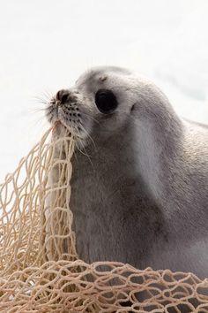 Oh-so-cute Seal!