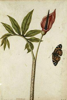 Jacques Le Moyne de Morgues, 1575