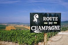 Route du Champagne sign, near Epernay, Marne, Champagne Ardenne, France, Europe (1890-39253 / 681-258 © Robert Harding Picture Library)