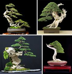 Wildly-Shaped Trees And Bonsai Art