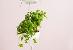 Make This Easy Hanging Herb Garden