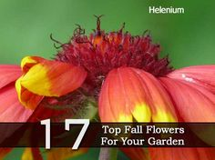 17 Top Fall Flowers For Your Garden
