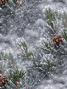 Snowy day on the pine tree - GIF
