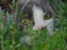 Кошки едят траву. Какую и зачем? Домашняя кошка обкусывает комнатные растения, и нет от этого никакого спасения, особенно ей почему-то