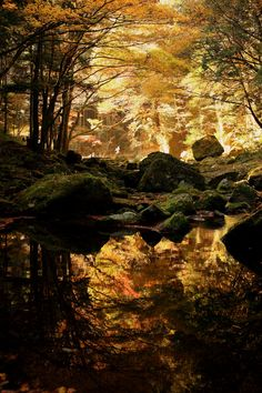 Enchanted woods ~ like a Maxfield Parrish painting