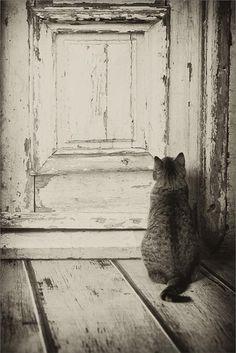Let me in.... #cat