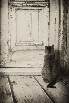 'Cats like doors left open in case they change their minds.' Rosemary Nisbet