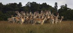 Spetchley Park Gardens - Deer Park