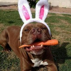 Easter pibble  ♥ (had to keep the caption)