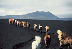Eldhestar, horseback riding in Iceland.