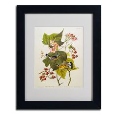 Black and Yellow Warbler by John James Audubon Matted Framed Painting Print