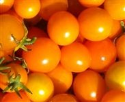 Amy's Apricot. Produces 3/4 inch golden cherry tomatoes that are bursting with robust flavor. Many tomato lovers find this a rival to Sungold for flavor.