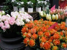 https://www.flowerwyz.com/flower-shops-online-flower-stores.htm  Click Here For Flower Shops Near Me,  How you can Recover Nearest Flower Shop. Flower Shops Near Me Is Bound To earn An Impact In Your Organisation.