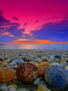 Pink Sunrise and Seashells Repinned by Author www.loisjoyhofmann.com