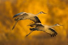 Flying Birds | www.way2faisal.tk