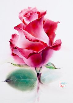 watercolor rose by LaFe Easy Watercolor, Watercolor Cards, Watercolor Flowers, Watercolor Paintings, Watercolour, Rose Paintings, Art Floral, Easy Art Projects, Action Painting