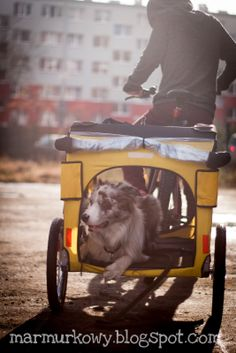 dog bike trailer, would be great for the beach!