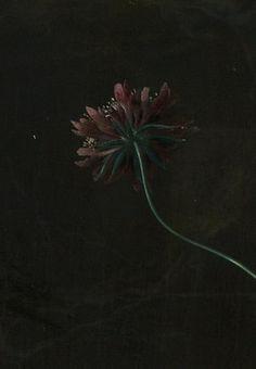 Jan van Huysum  Stilleven met bloemen en vruchten (detail)  Google Art Project